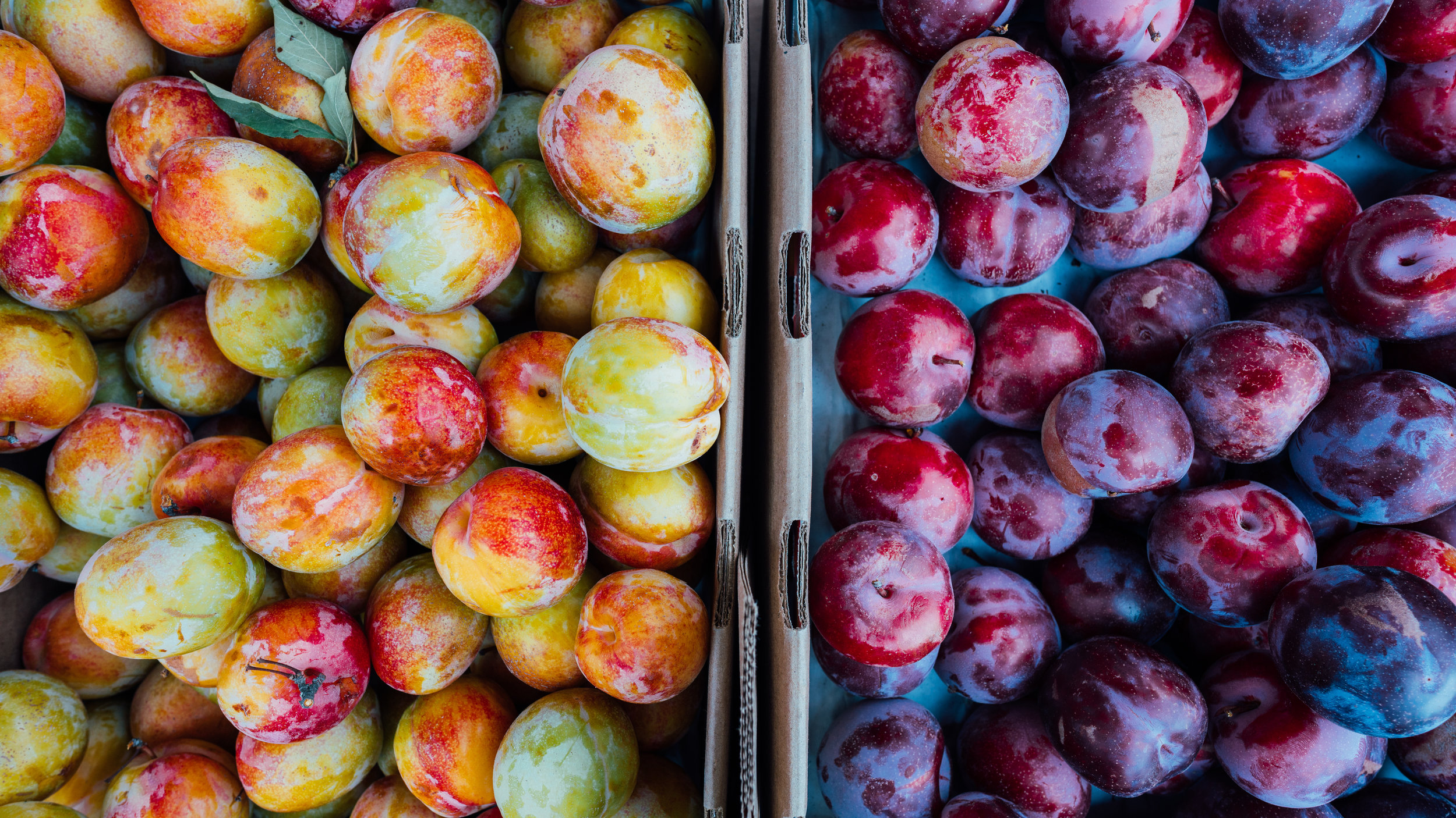 Three times during the harvest season, the Portland Fruit Tree Project will offer Members a  Fruit Share Box  filled with freshly harvested local fruit such as apples, pears, plums, or persimmons. Fruit Share Boxes will be picked up by Members - details will be communicated to Members regarding pickup dates and locations!