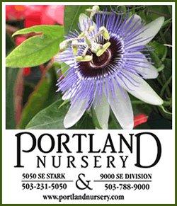 pnpassionflower.jpg