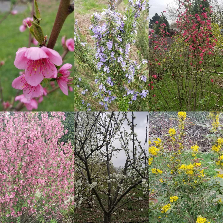 april+flower+collage.jpg