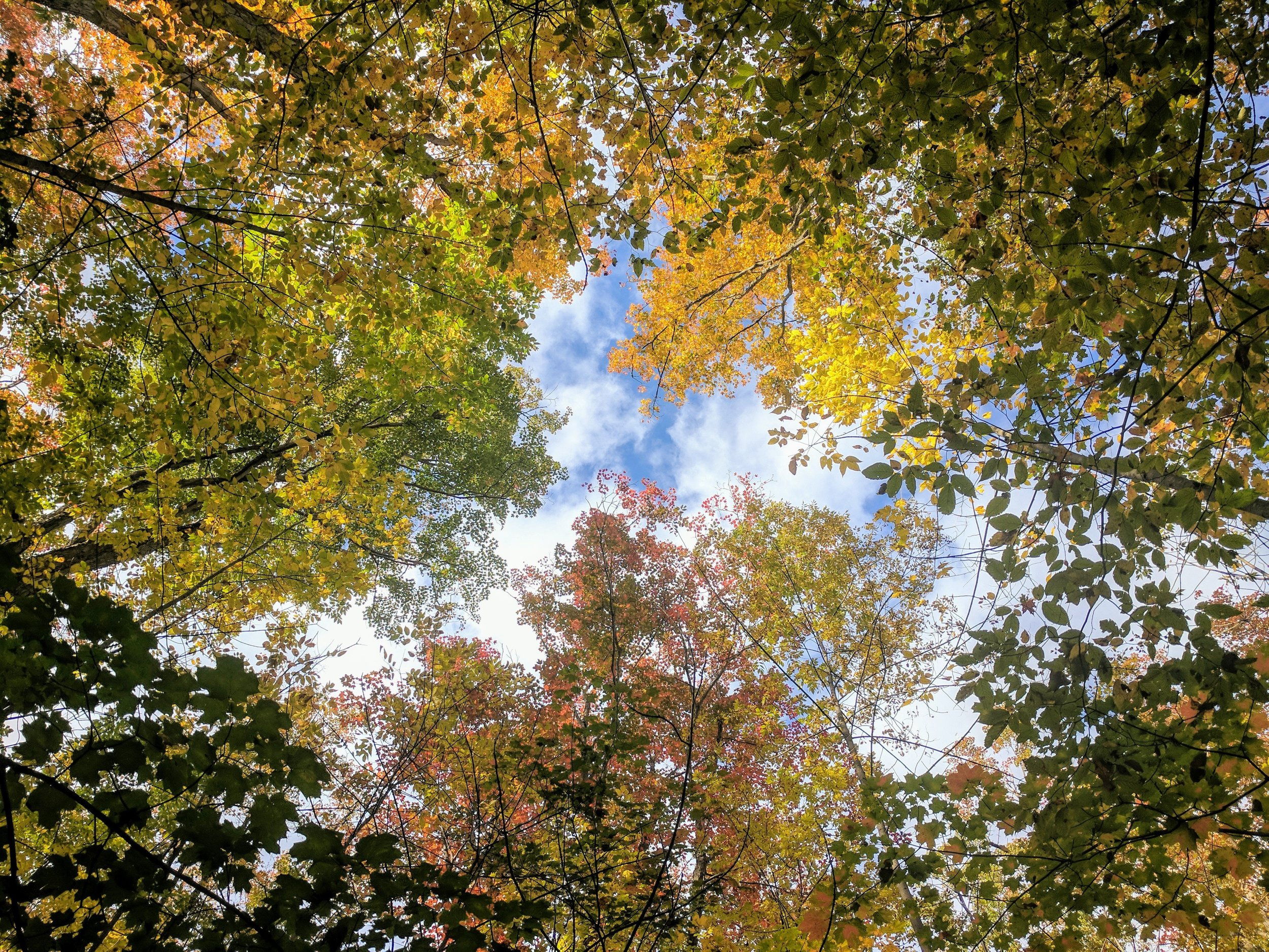 colorful-forest-leaves-in-canopy photo.jpg
