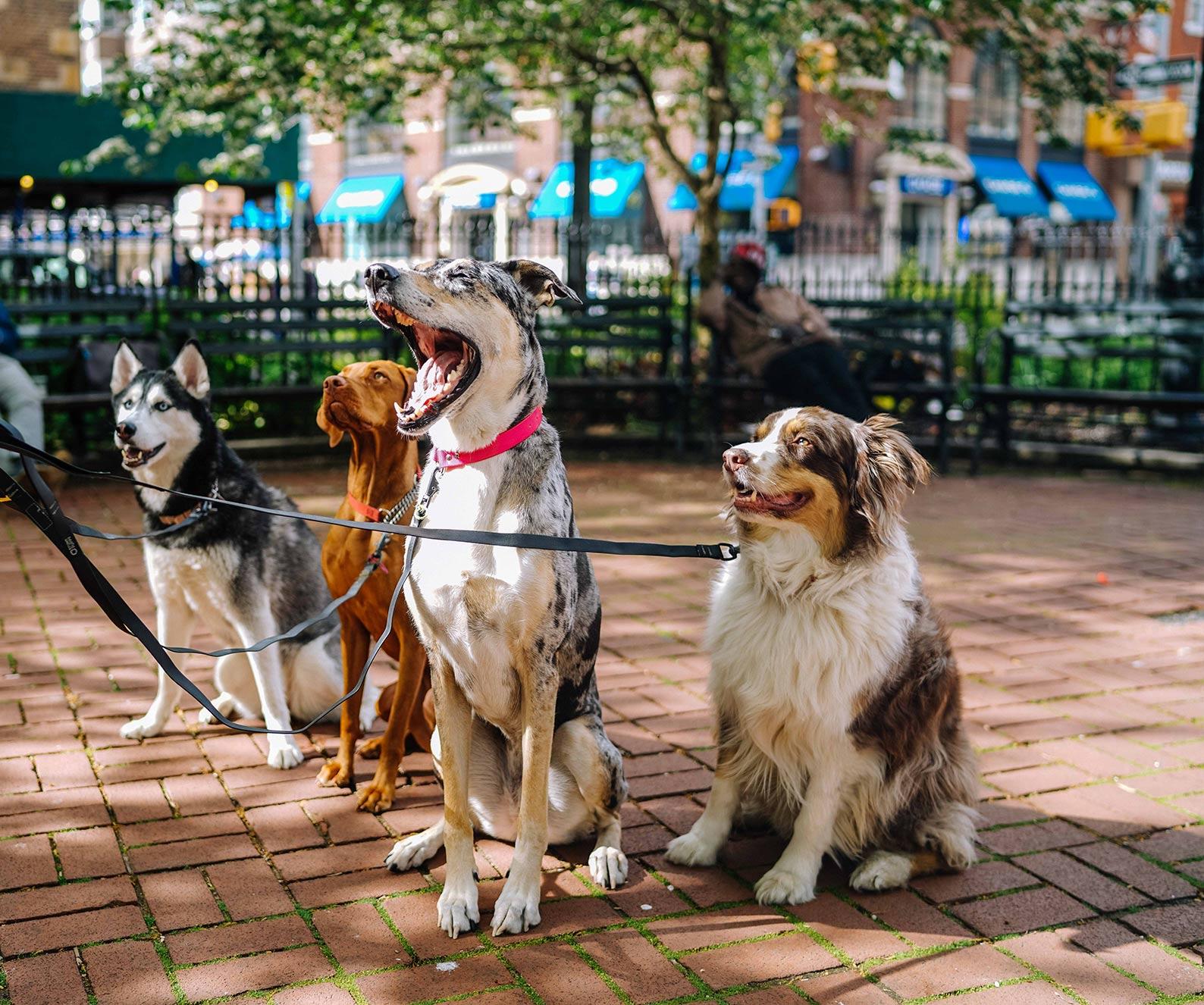 group-classes-high-drive-dog-company.jpg
