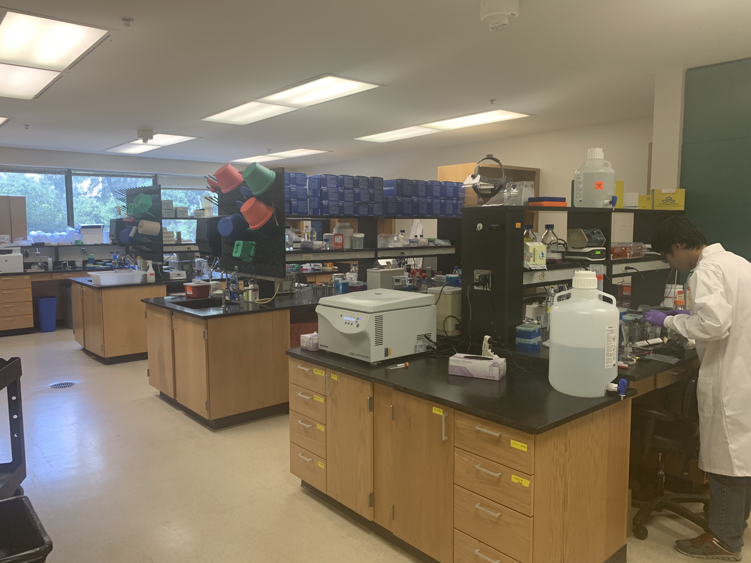 Our lab is fully set up! August is running his RNA gel (right side of the image).