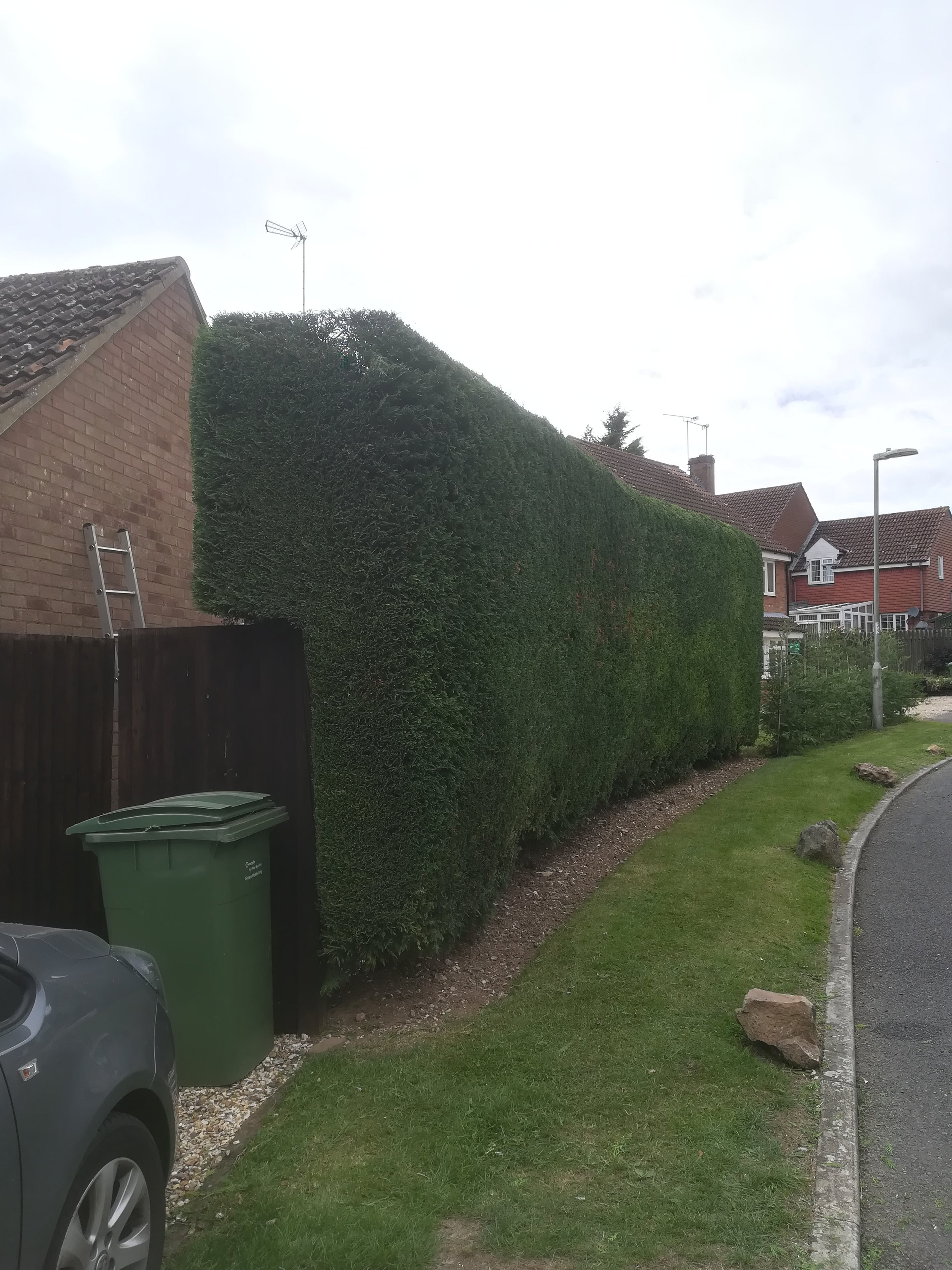 Yew Hedgetrimming After.jpg