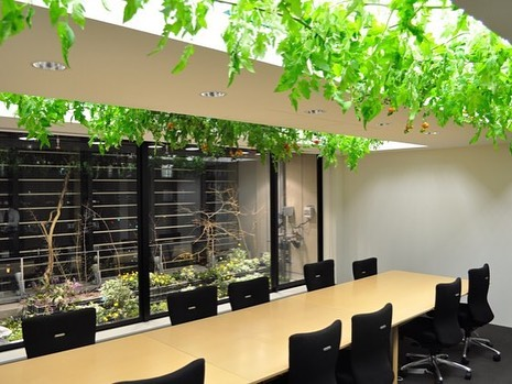 In an ever-urbanizing world large cities need to find innovative solutions to the increased need for food. In Tokyo, Pasona turned their office building into an urban farm that grows over 200 kinds of crops!  #aquaponicsystem#aquaculture#instafarm#hydroponics#hydroponicgarden#gardening#gardeningtips#sustainablefood#sustainability#sustainablefarming#urbangarden#verticalgarden#verticalfarming#verticalgardens#verticalgardening#modernfarm#horticulture#plants#circulareconomy#growyourown#cleanfood#growyourfood#healthyfood#growinggreens#fish#water#food#fishandsalad#london#tokyo