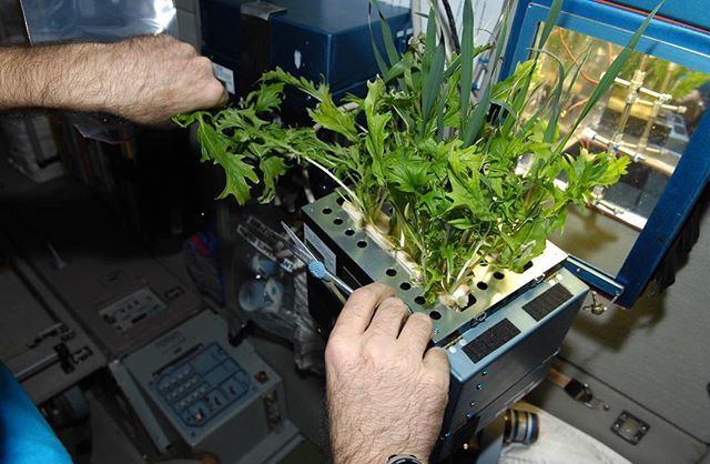 Did you know NASA uses vertical farming on the International Space Station? Not only could hydroponics be the future of farming on earth, it could also assist in long distance space travel!  For more info check out our website, link in the bio 🐟🌱 #aquaponicsystem#aquaculture#instafarm#hydroponics#hydroponicgarden#gardening#gardeningtips#sustainablefood#sustainability#sustainablefarming#urbangarden#verticalgarden#verticalfarming#verticalgardens#verticalgardening#modernfarm#horticulture#plants#circulareconomy#growyourown#cleanfood#growyourfood#healthyfood#growinggreens#fish#water#food#fishandsalad#london#space