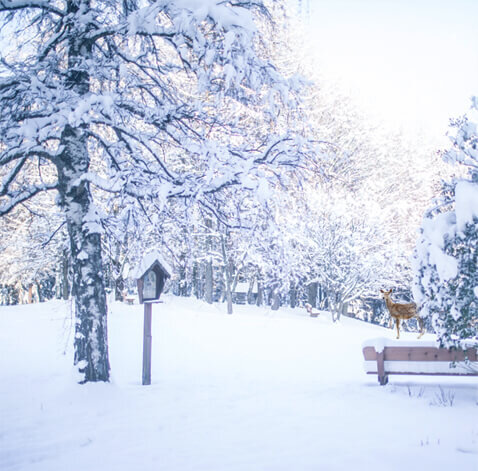 gartenpark-winter-big.jpg