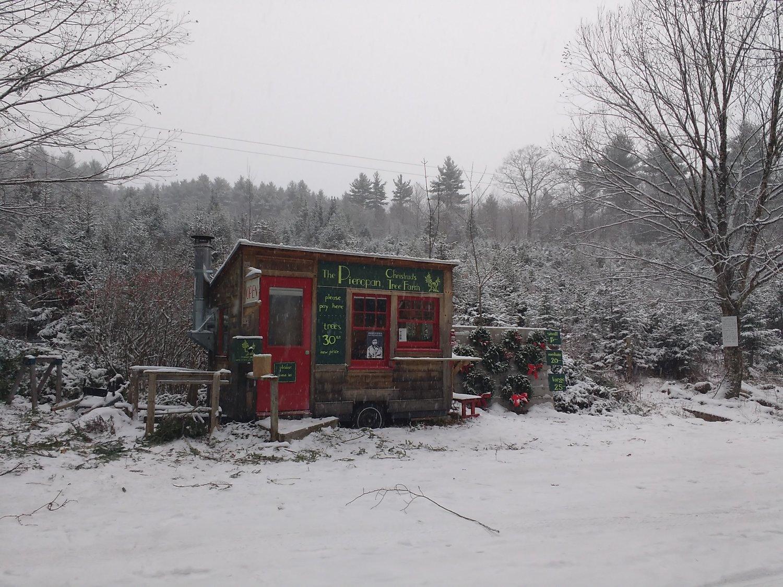 Christmas Tree Farm Photos.The Pieropan Christmas Tree Farm