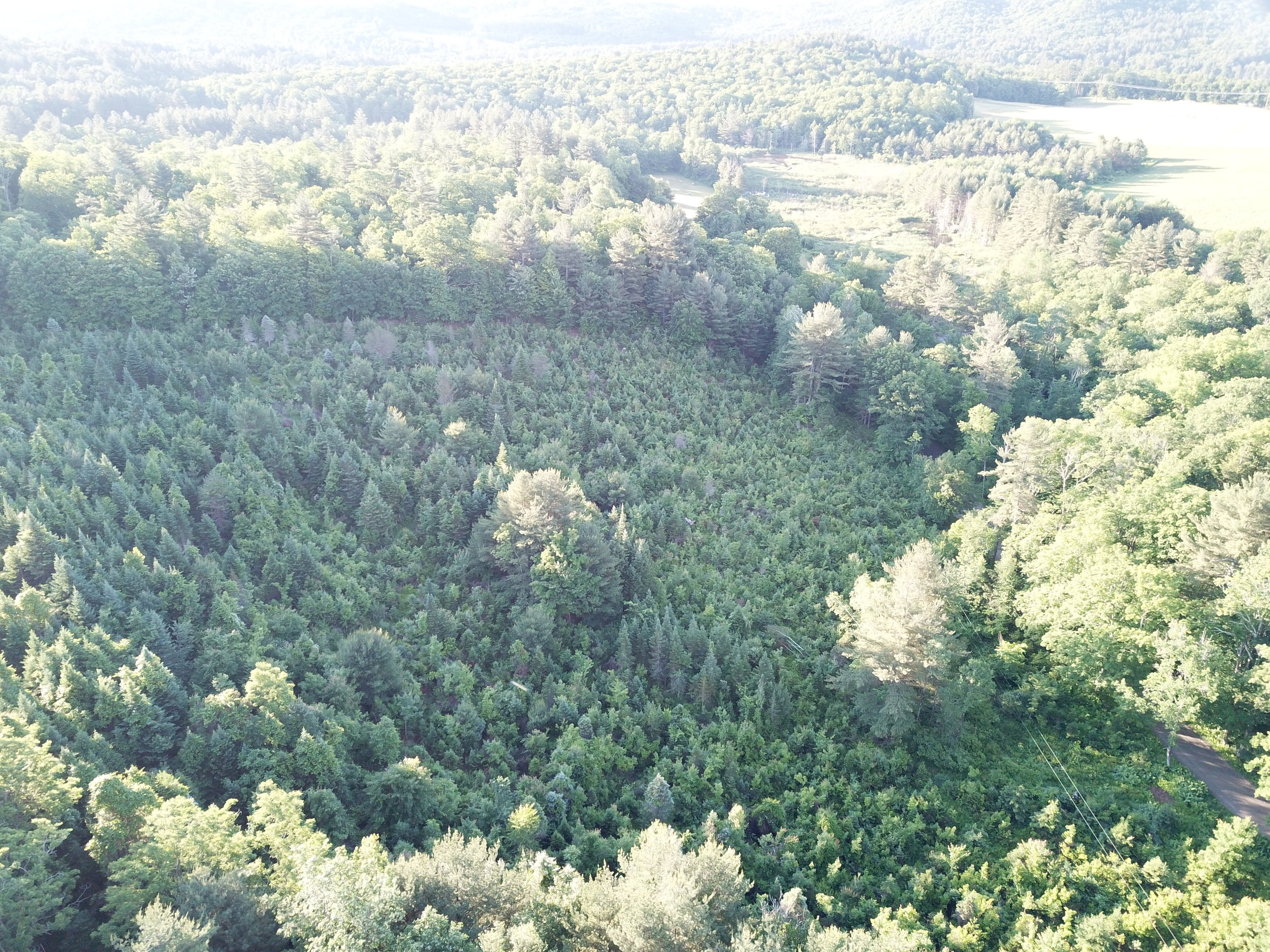 The You-Cut grove from the air (photo by Tom Utterbach)