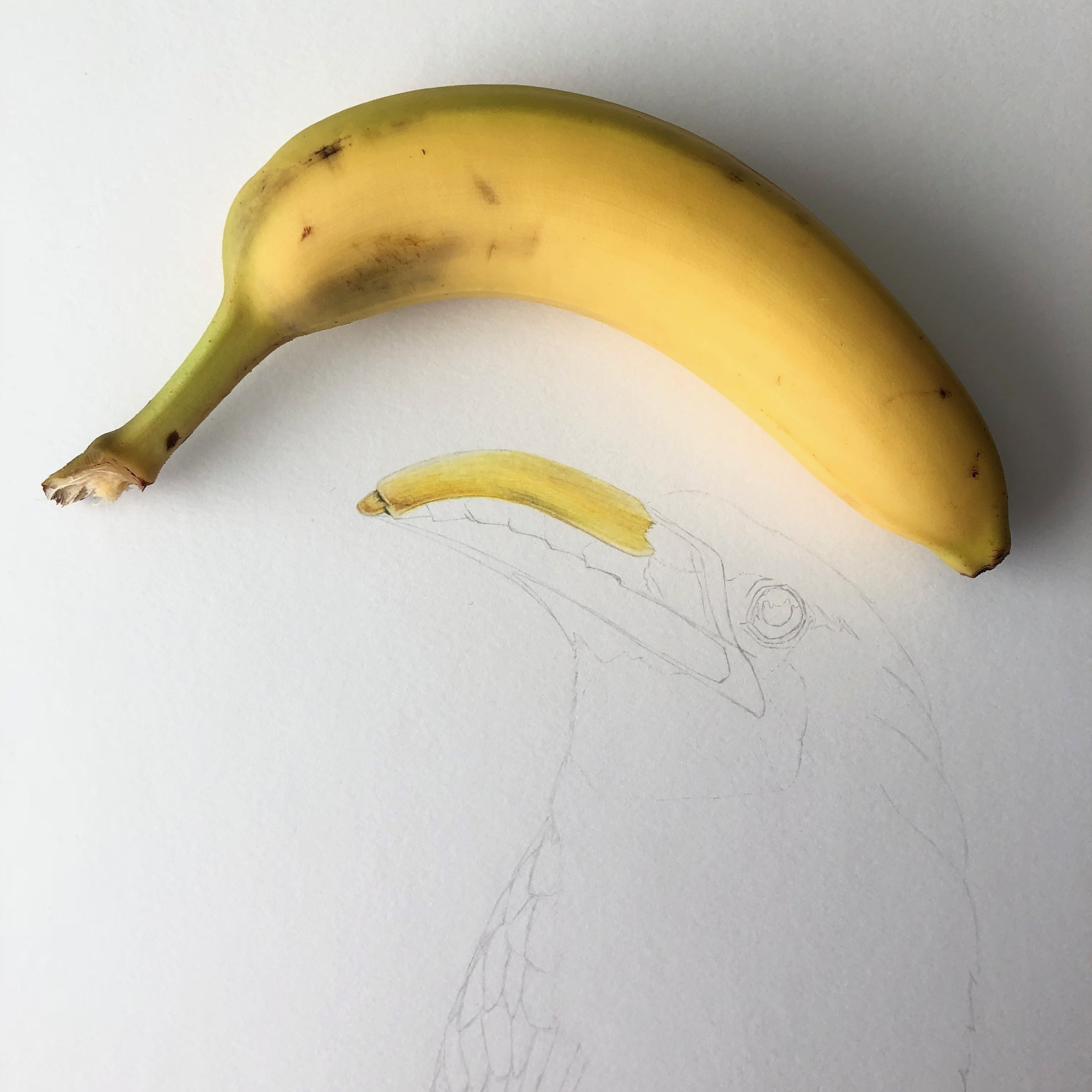 """And this was how he got his online nickname """"Banana Tim"""". I needed some visual assistance and coincidentally had the perfect banana in my kitchen. No bananas were injured in the making of this image, although it did become my afternoon snack =)"""
