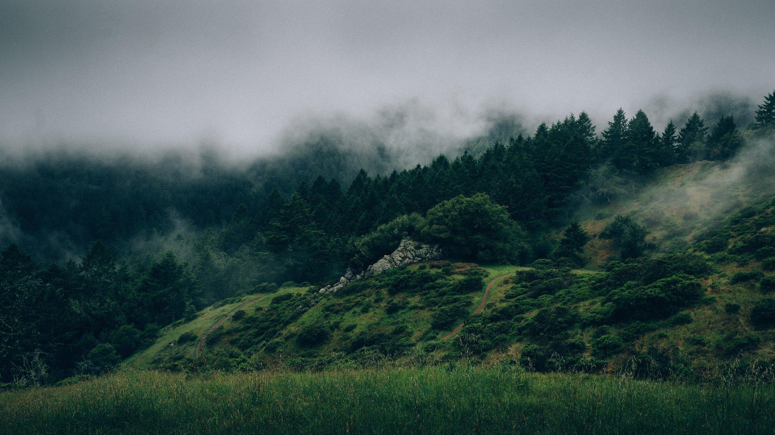 forest-371223.jpg