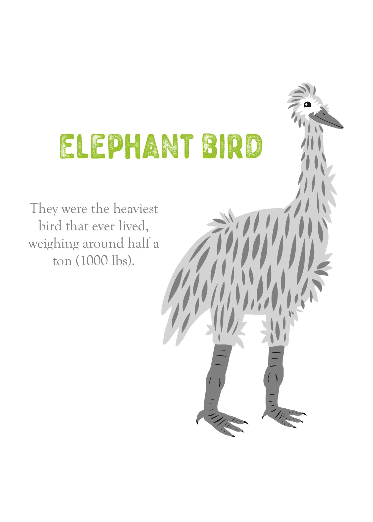 enml-elephantbird.jpg