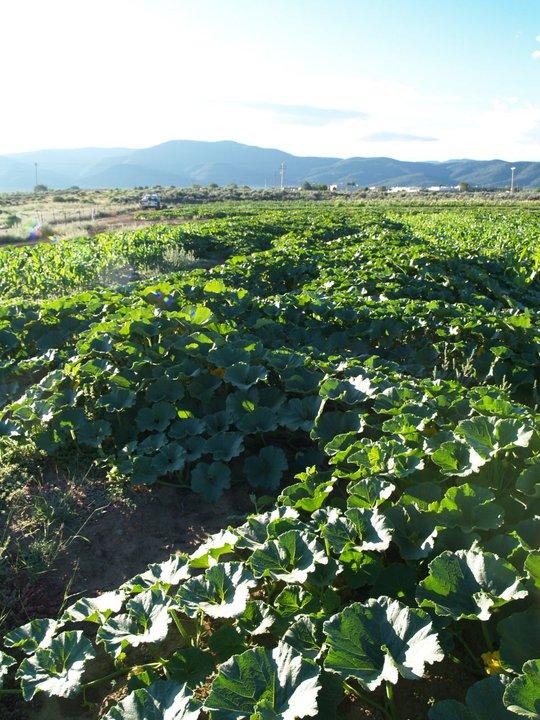 bobs farm 3 .jpg