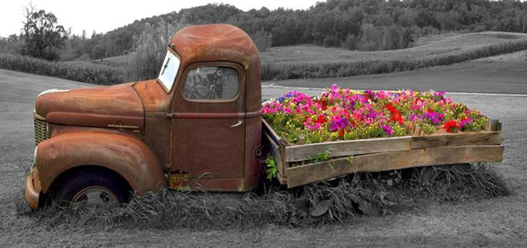 Old Truck and Flowers