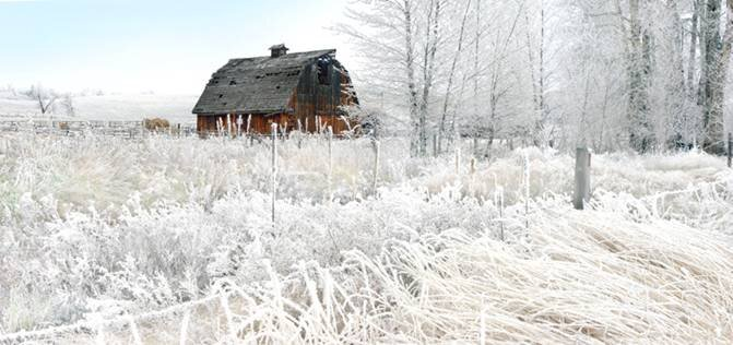 Barn and Hoar Frost