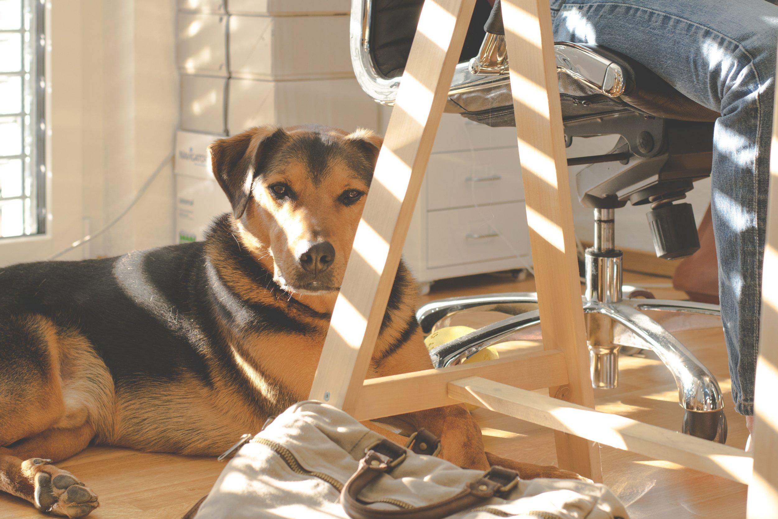 animal-canine-casual-312599.jpg