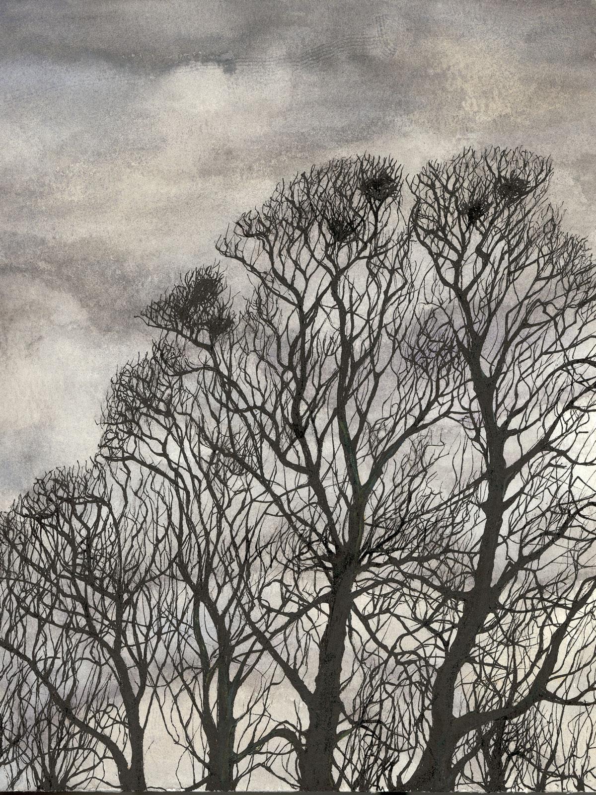 Beech Trees