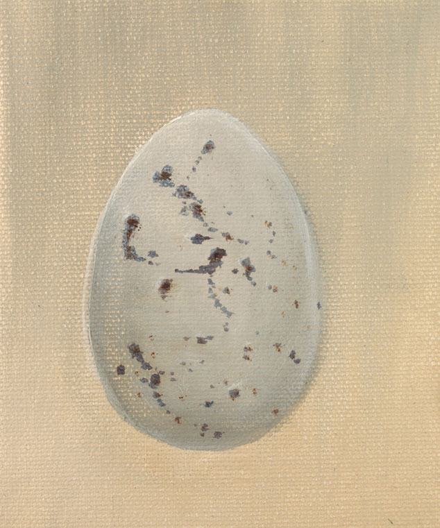 Large Crow Egg