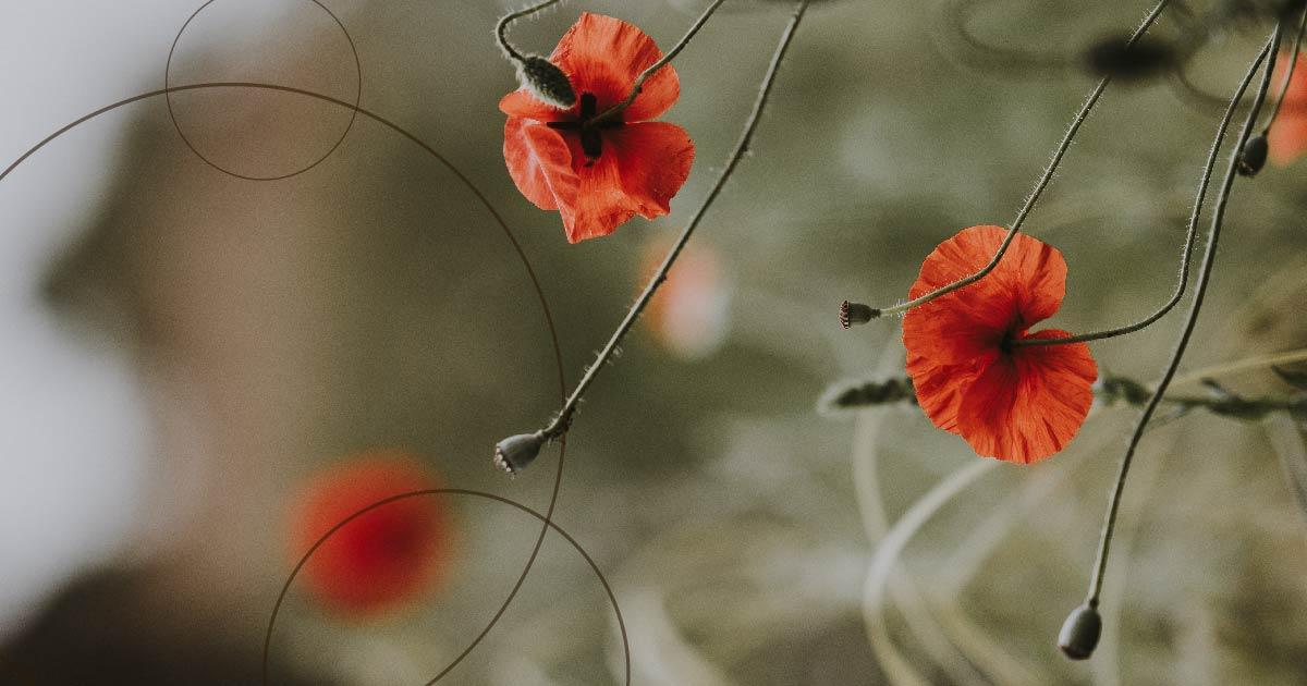 minimal flowers-01.jpg