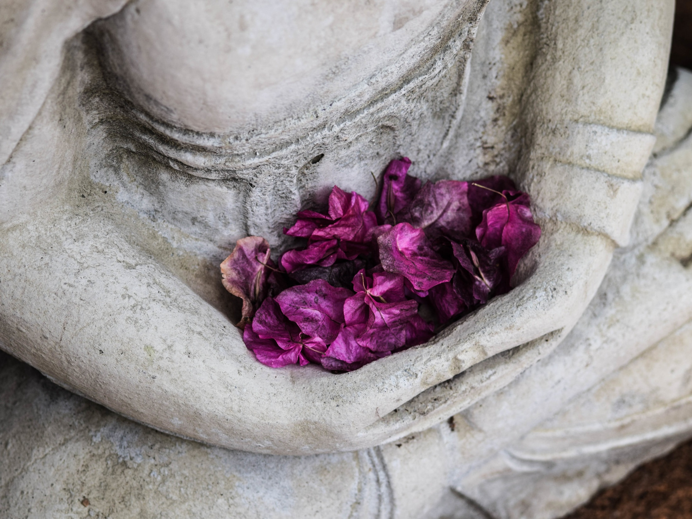 Buddha holding flower petals.  Reiki in Charlotte, NC