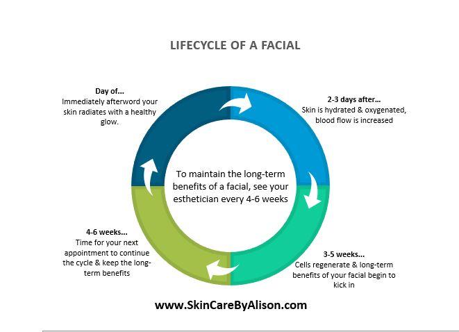 LIfecycle of a Facial.JPG