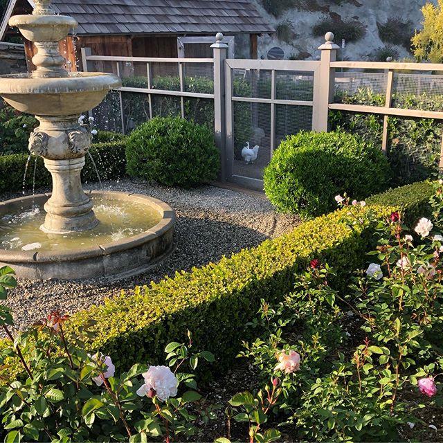 Spring @ home #chickencoops #rosegarden #davidaustinroses