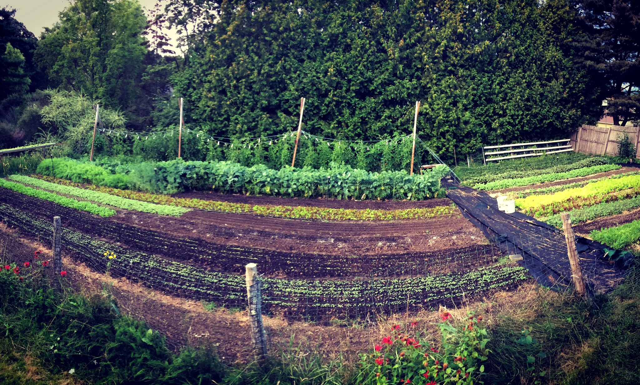 Interested in Starting a Backyard Farming Adventure of Your Own? -
