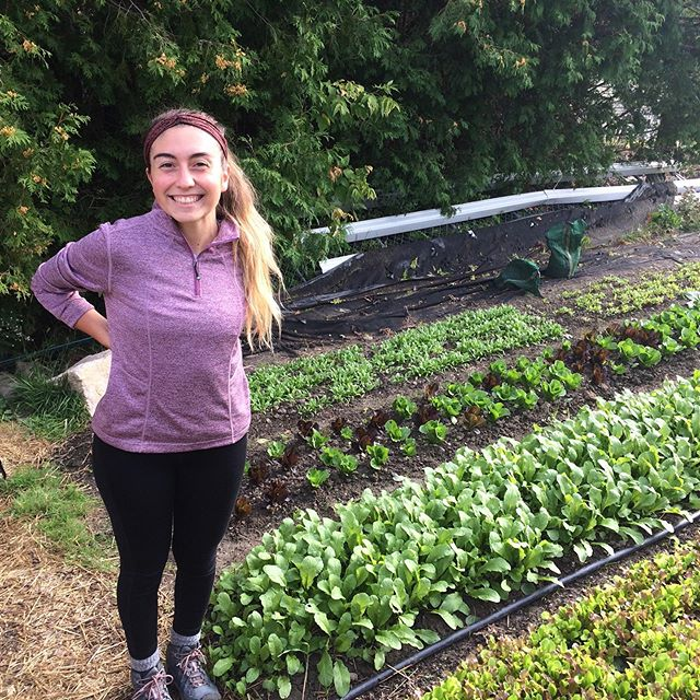 This is Sam. This is Sam's plot. Sam is absolutely crushing growing vegetables in her plot. Sam is doing a fall internship on the farm and we offered her a corner of one of our plots in the NNE. She planned it, planted it, and is now watching as vegetables literally 🌱explode🌱 out of it. Nice work Sam!! @herfoodthoughts  #soexcited #growyourown #urbanfarming #backyard #marketgarden #uvm #learntogrow #farmyouryard