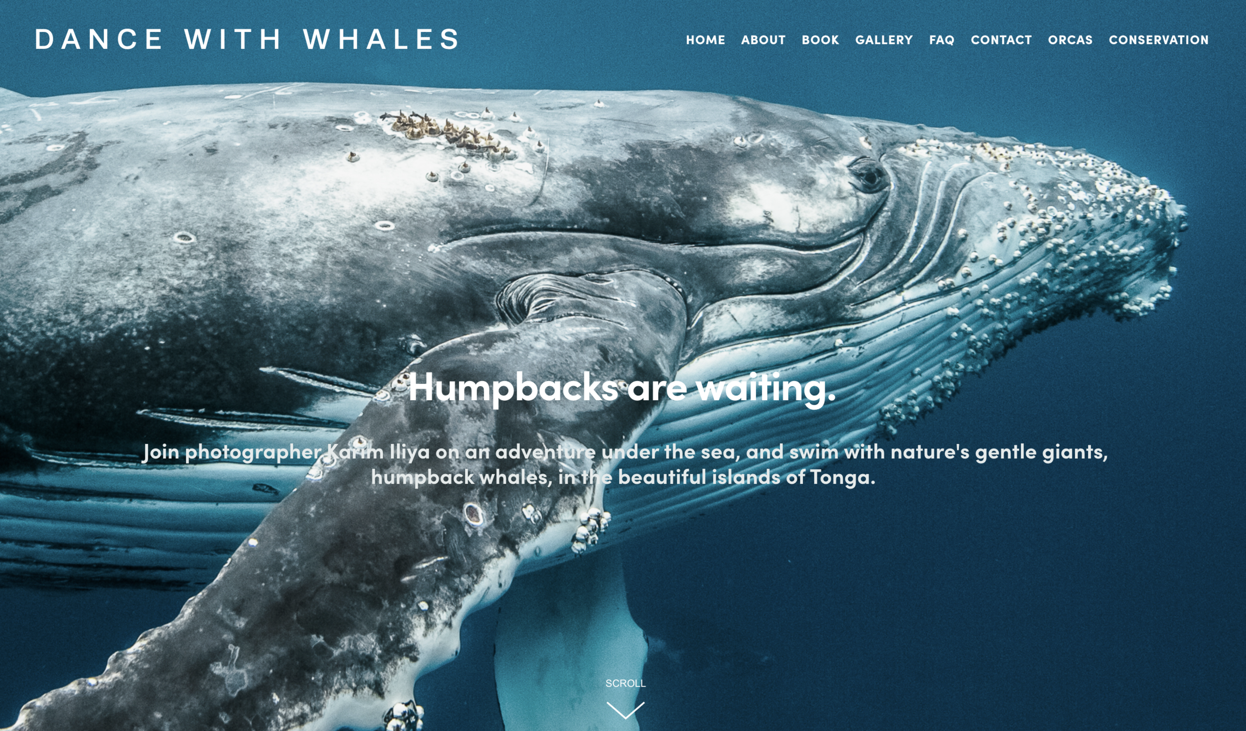 homepage_dancewithwhales.png