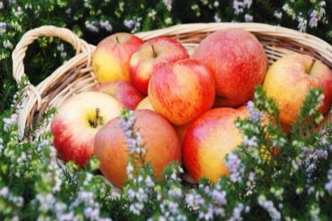 The apple of the eye - As the stars of heaven are, so is Israel the apple of God's eye…