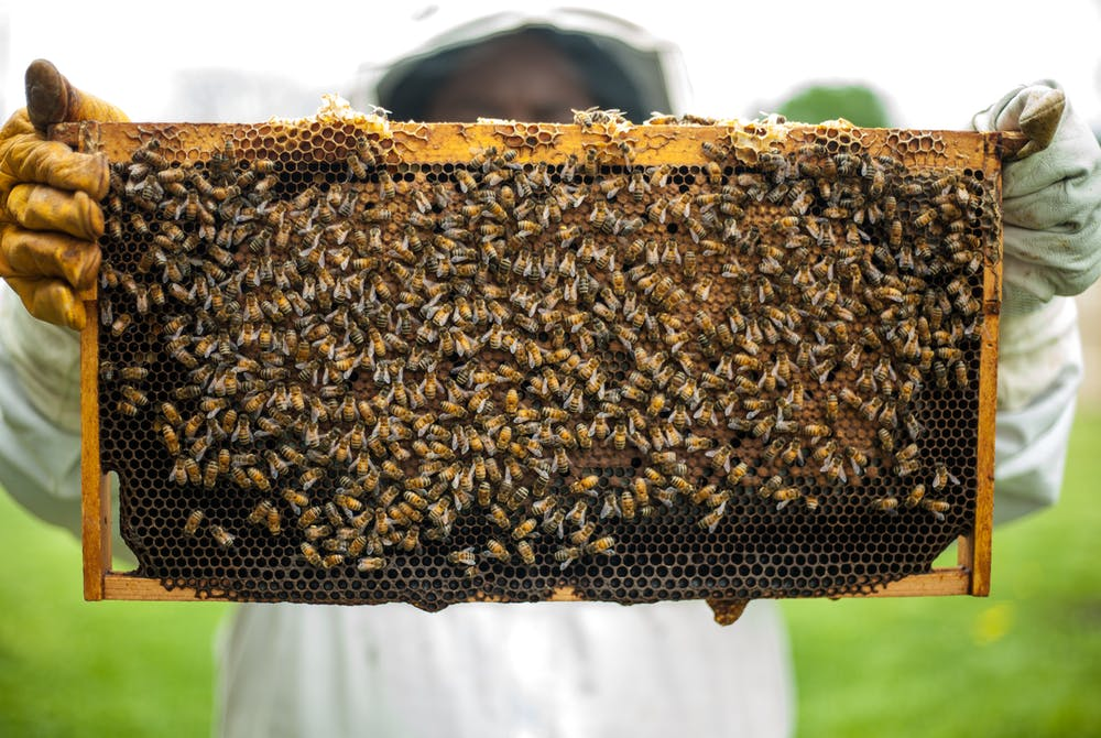 honey frame with bees.jpeg