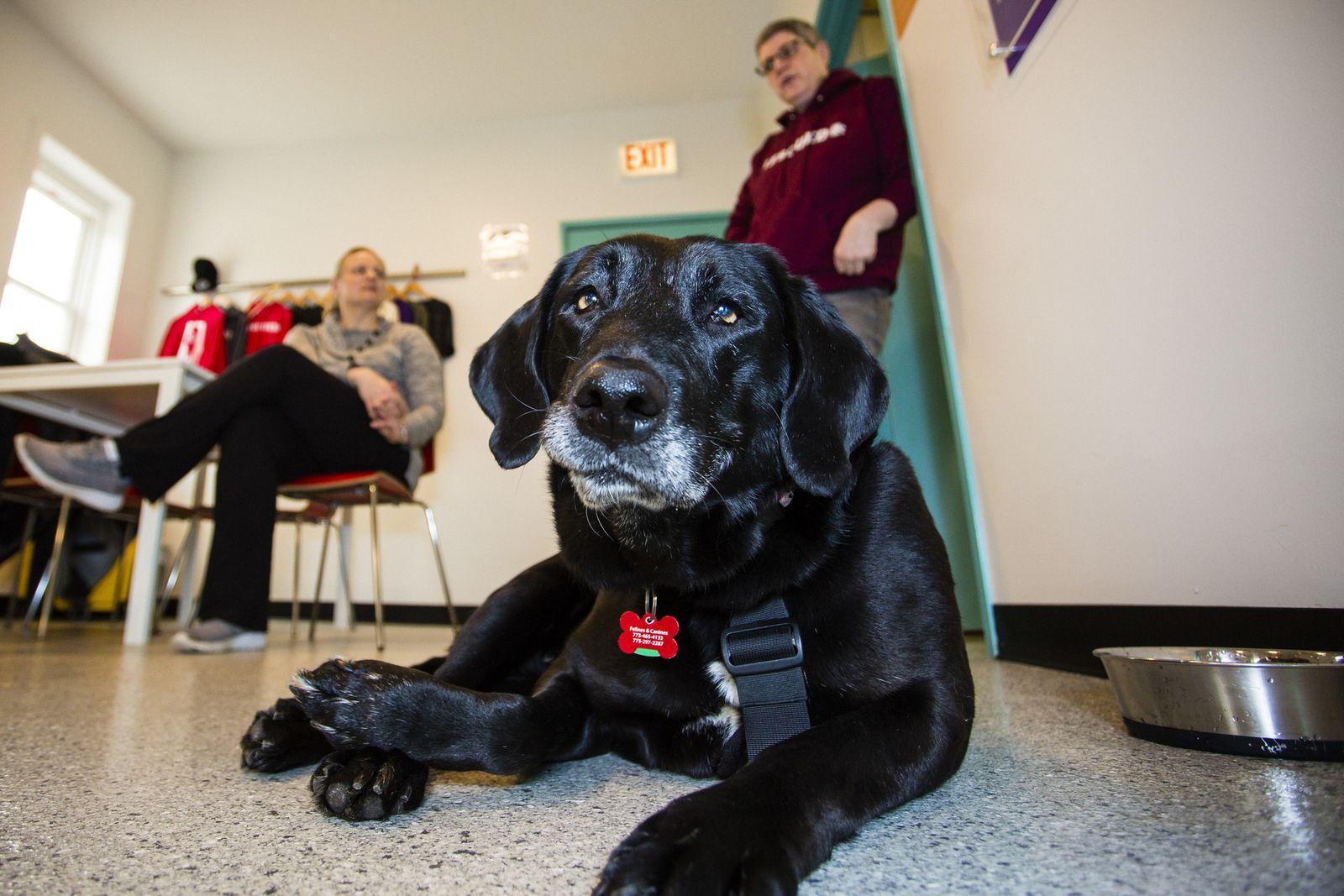 Bunny, the Alabama fund-raising dog