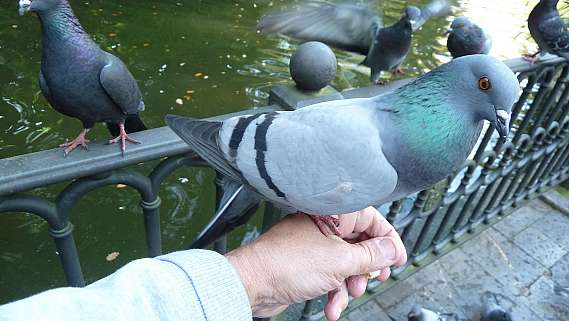 Jon's Pigeon Therapy article well received