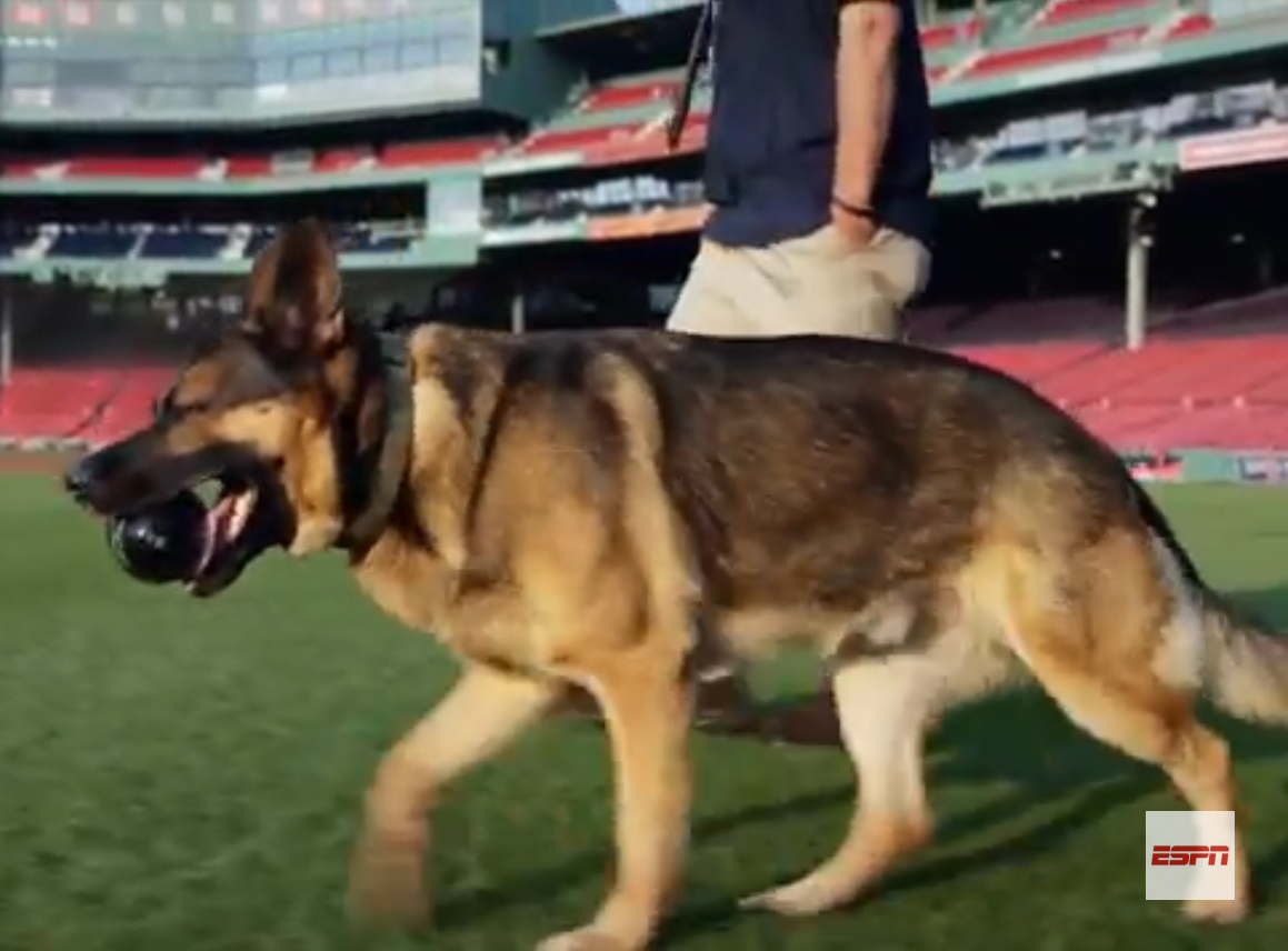 Drago full service baseball dog