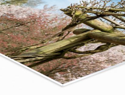 Highlights   Lichtgewicht materiaal  Eenvoudig te bewerken  Echte fotokwaliteit voor de mooiste presentatie  Ook in panormaformaten