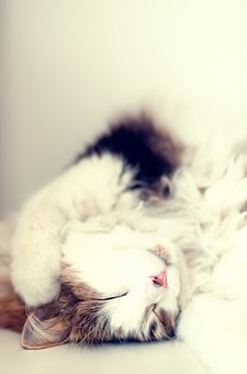catrest.jpg