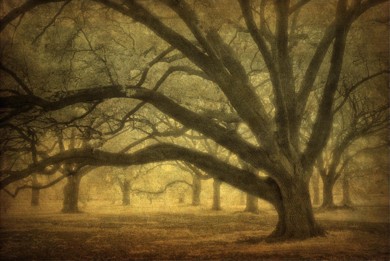 Audubon grove infrared_clr.jpg