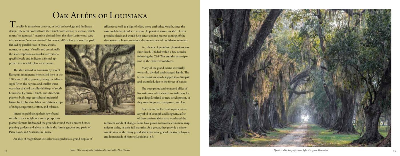 Quercus Louisiana_P-28-29.jpg