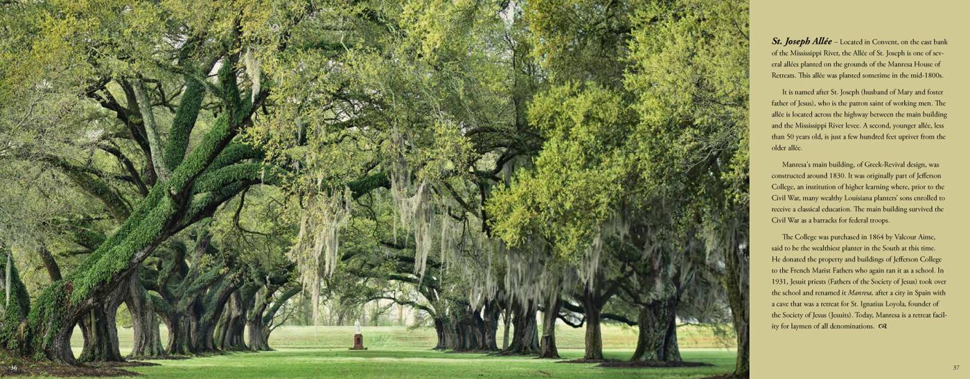 Quercus Louisiana_P_42-43.jpg