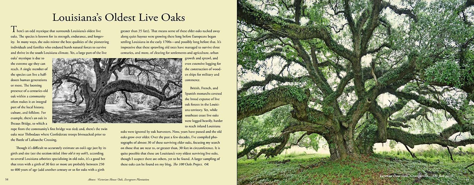 Quercus Louisiana_64-65.jpg