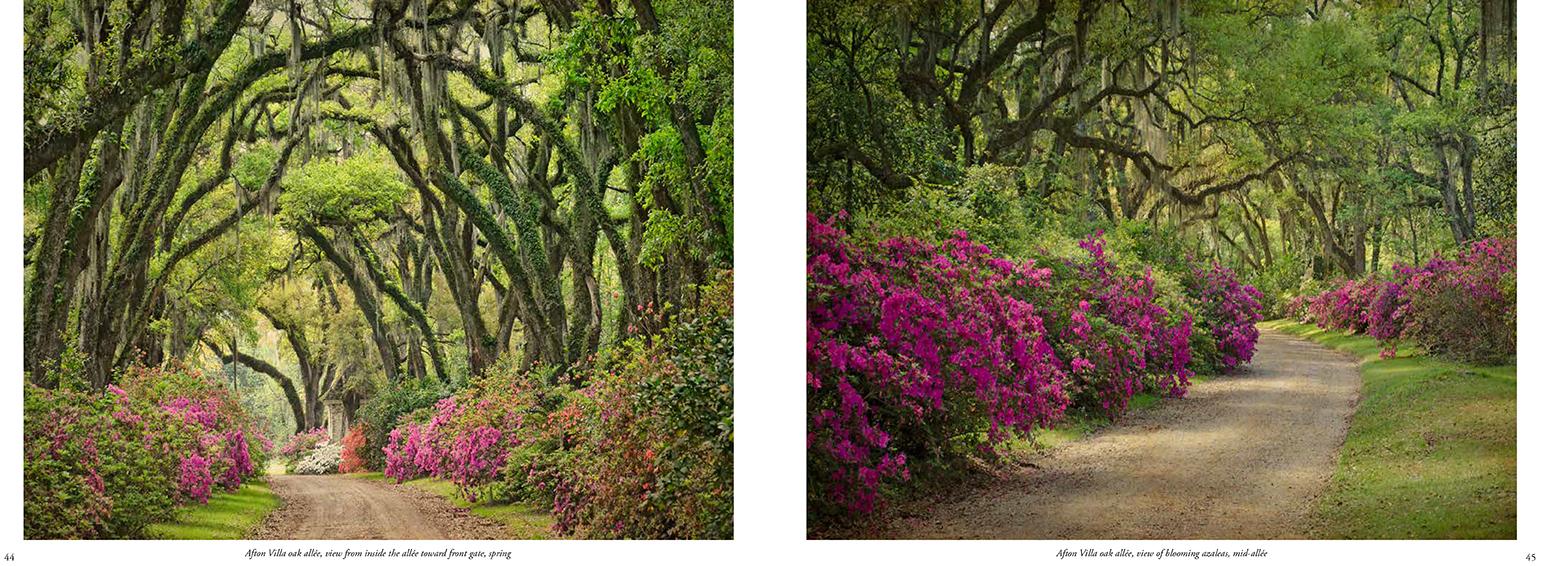 Quercus Louisiana_50-51.jpg