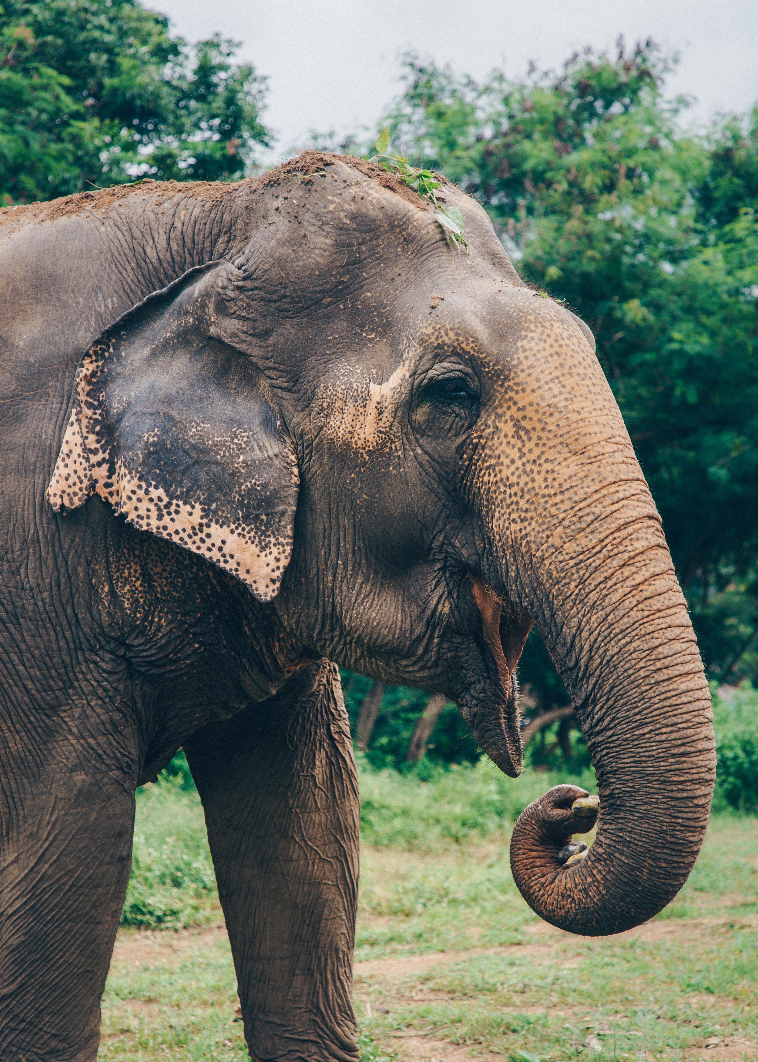 Elephant Sanctuary - Koh Samui, Thailand