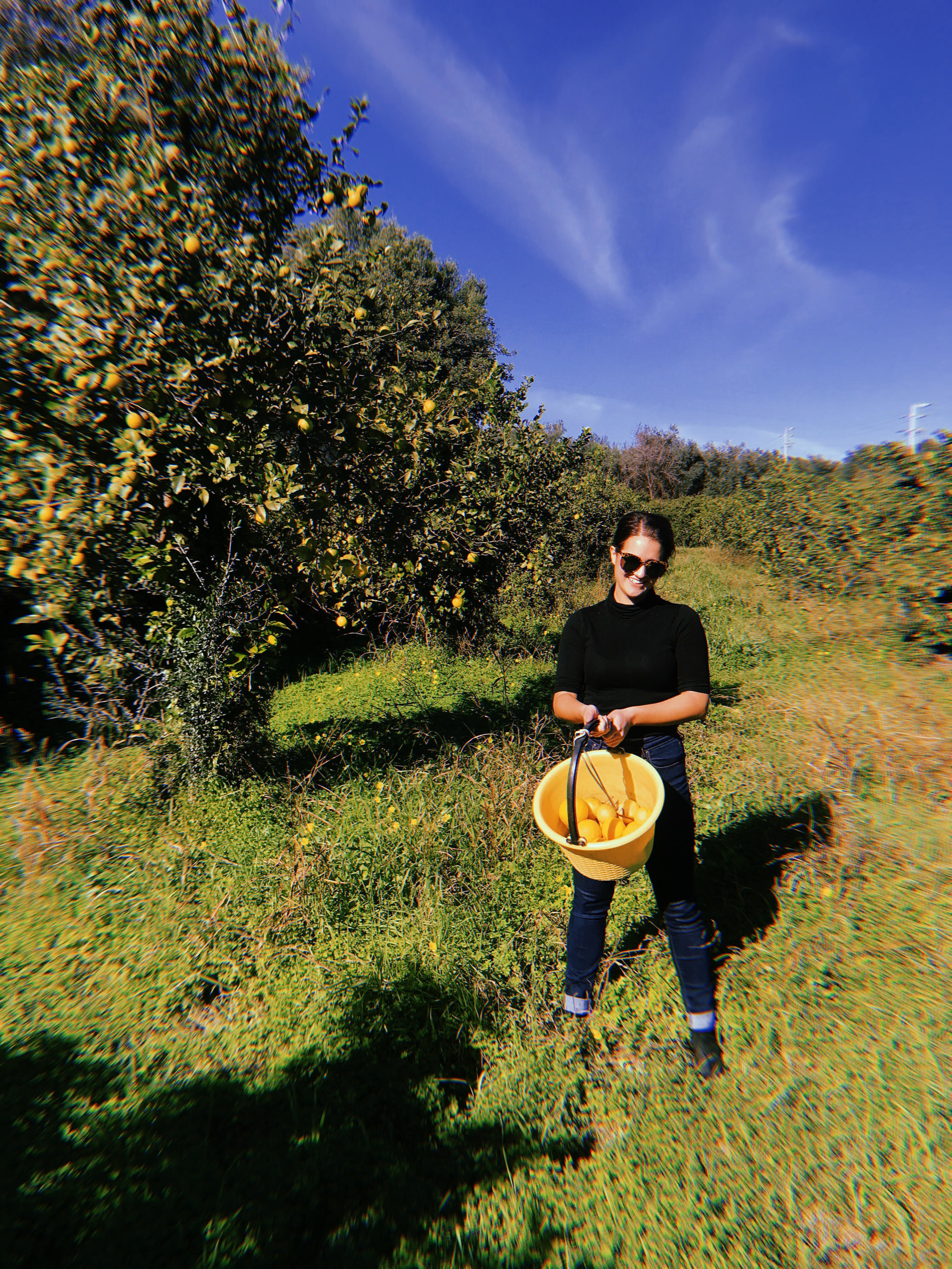 A photo of me picking lemons on a citrus grove in Noto, Sicily.
