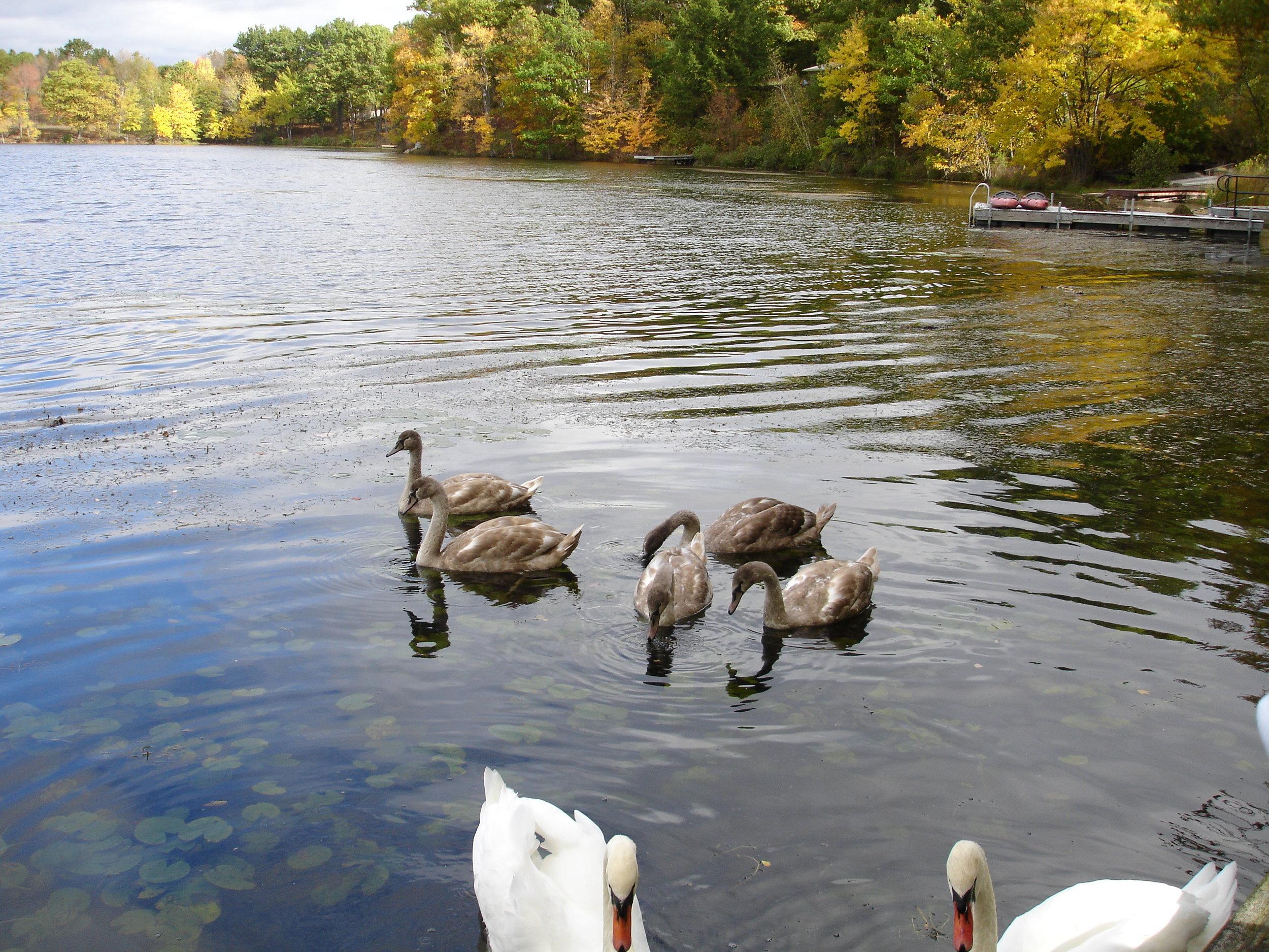 Lake in 2011