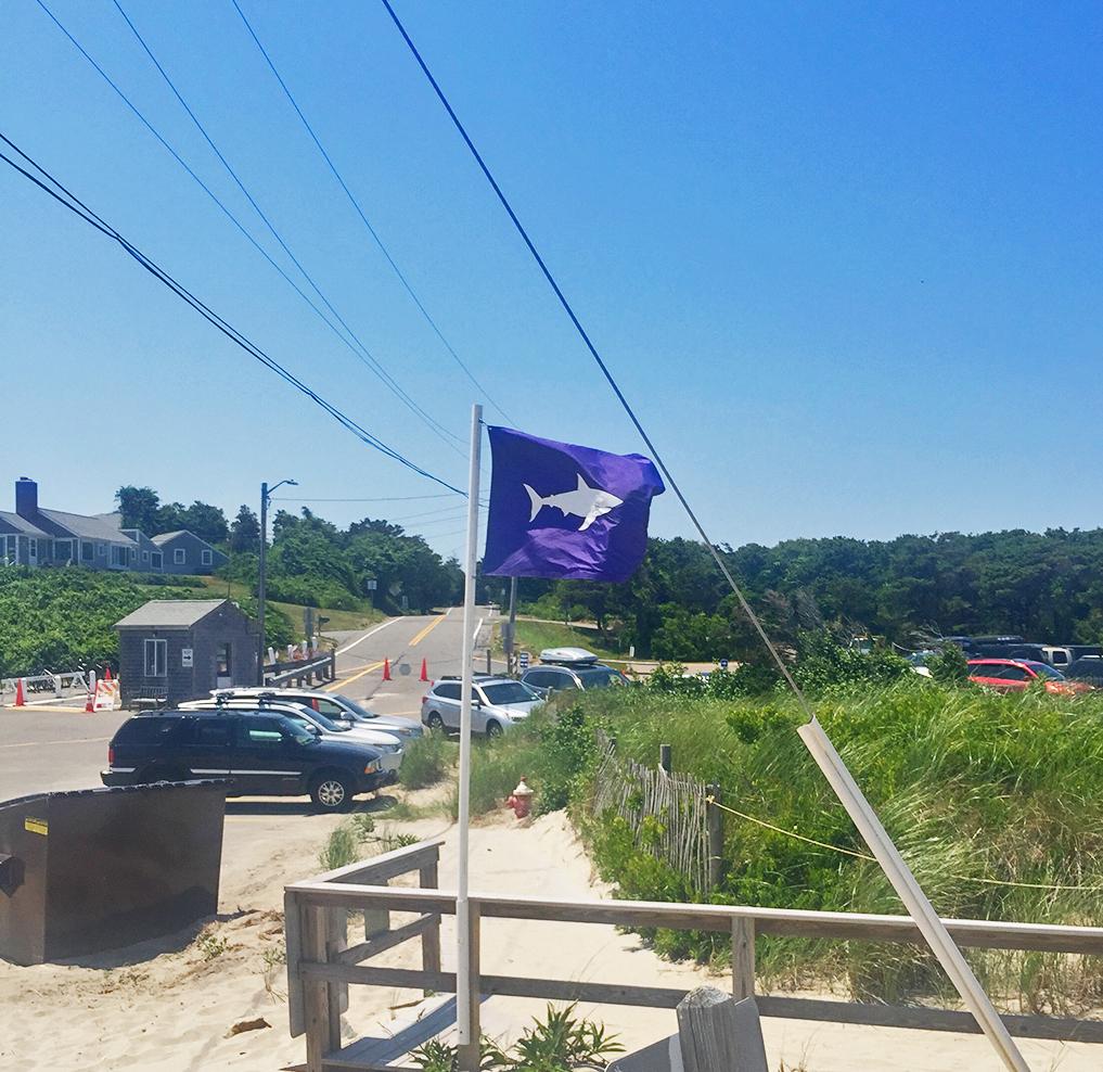shark flag.jpg