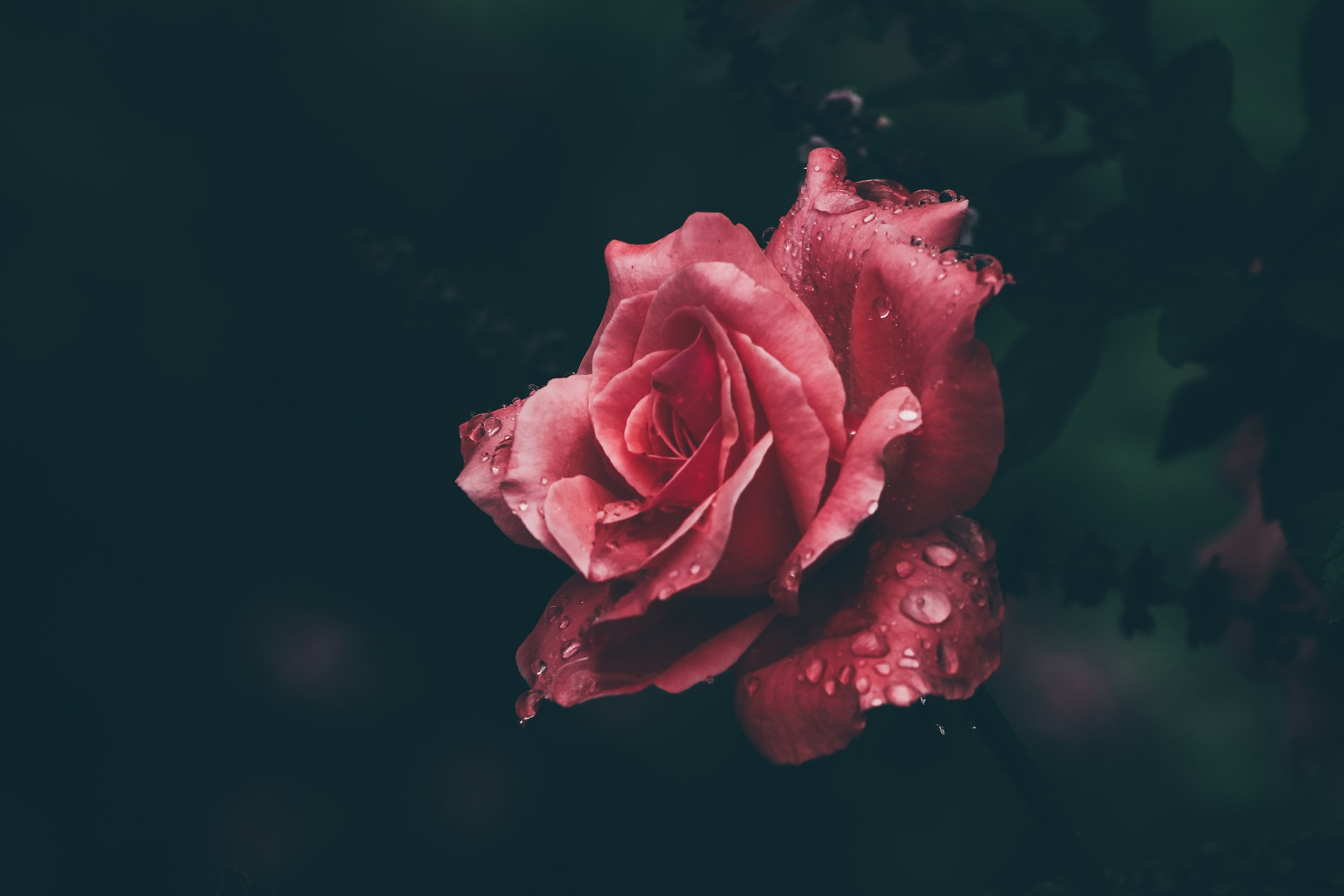 A rose by any other name would smell as sweet.