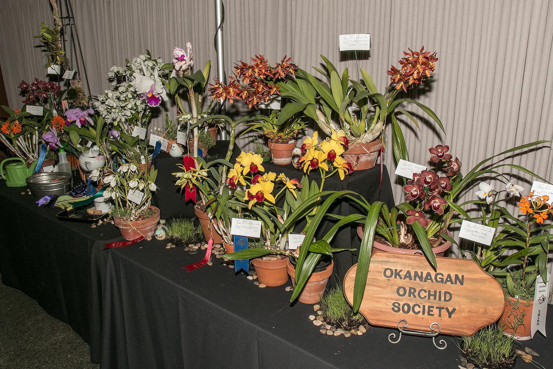 Okanagan Orchid Society display