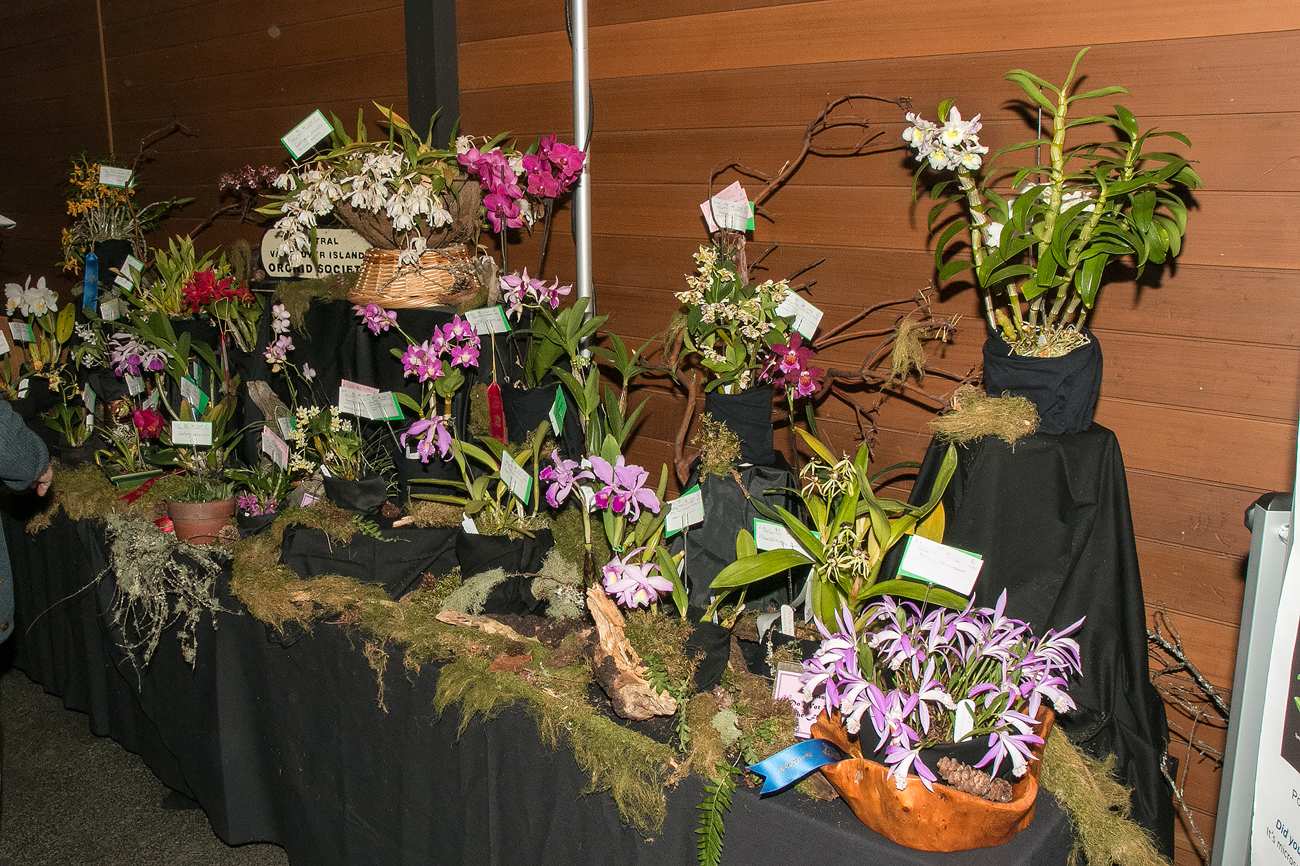 CVIOS display - Best Visiting Society display (Congratulations Leslie, Suzanne, and Darlene)