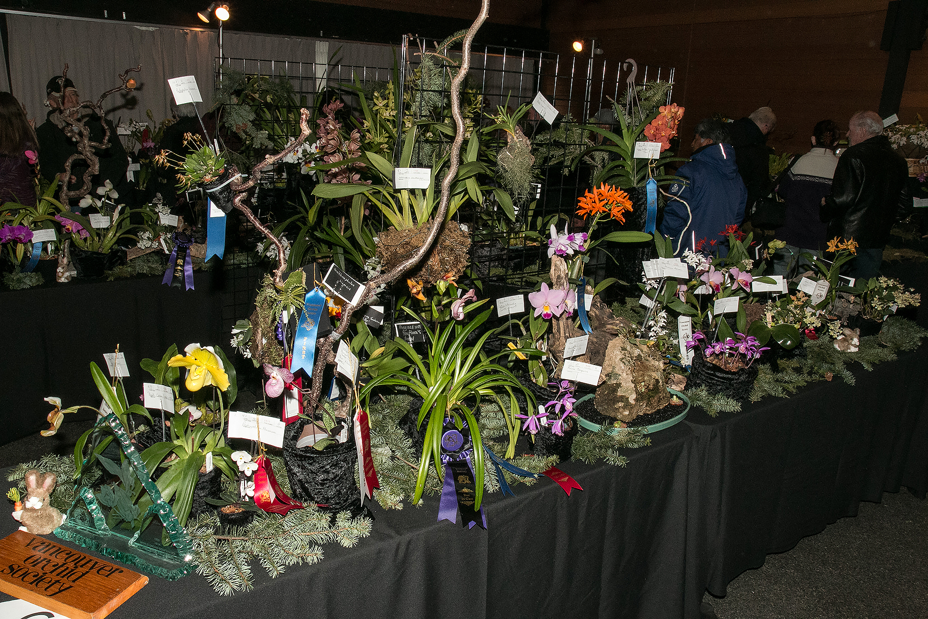 Vancouver Orchid Society display