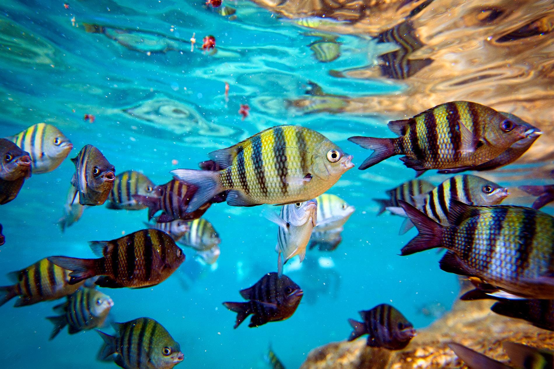 Att snorkla eller dyka och få möjlighet att fotografera under vatten är en upplevelse. Det är en helt ny värld som öppnar sig och fiskarna är viss mån fortfarande försiktiga men det är betydligt lättara att komma nära speciellt om man dyker med tuber.  Foto Mikael Wallerstedt