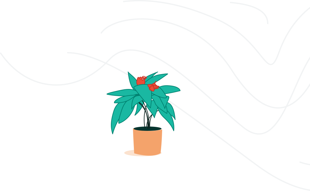 plant image.png